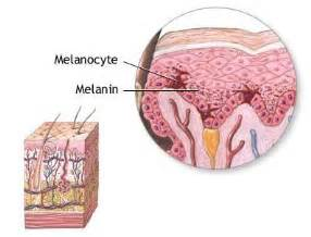 skin color melanin seer layers of the skin