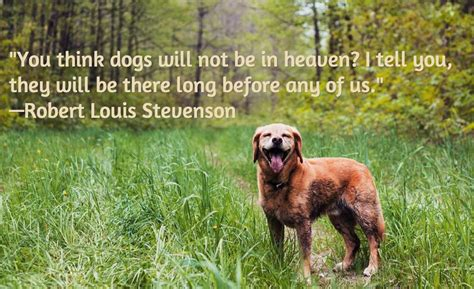 how to comfort dying dog dog death quotes quotesgram