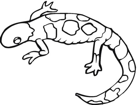 Colorful Gecko Coloring Page Supercoloring Com Gecko Coloring Pages