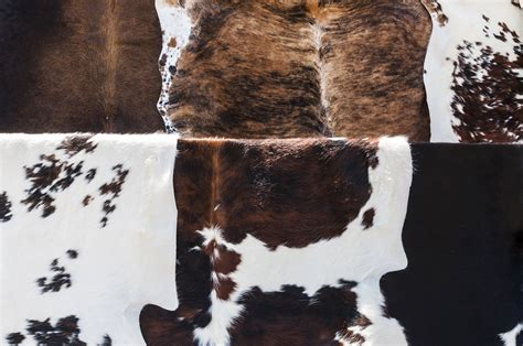 How To A Cowhide Rug by How To Hang A Cowhide Without Nails Cowhide Rug Tips