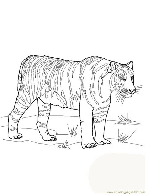 advanced tiger coloring pages advanced coloring tigers coloring pages