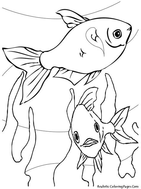 aquarium fish printable coloring sheet realistic