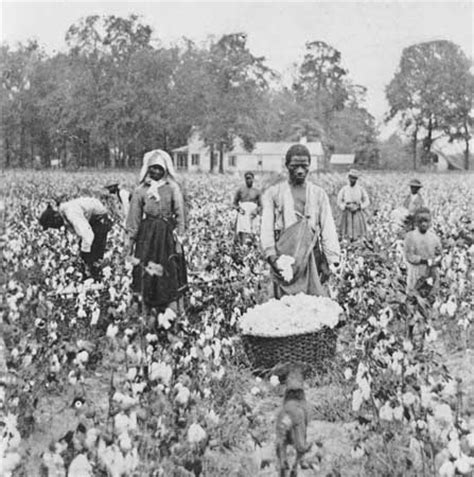 black litigants in the antebellum american south the franklin series in american history and culture books wikihistoria sharecropping