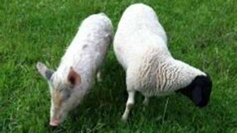 Pet Barn Geelong the grounds at alexandria s stolen pets kevin bacon and