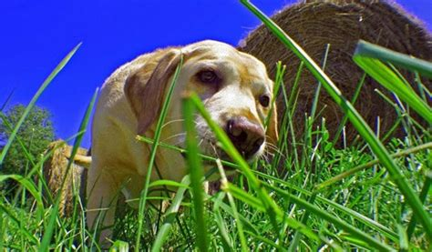 how often do puppies need to eat why and how to stop dogs grass and fur