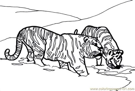 coloring pages lions tigers free coloring pages of lion tiger