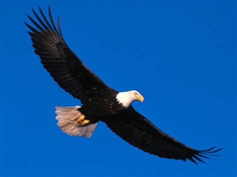 On Wings Of Eagles 1 on the wings of eagles creation faith facts
