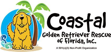 golden retriever rescue of central florida national rescue committee of the golden retriever club of america