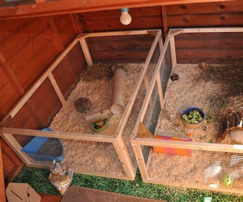 guinea pig  rabbit shed instructables