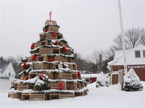 who introduced xmas trees to britain this is a thing lobster trap trees are serious business in new cond 233 nast