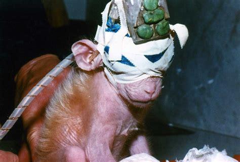 test sugli animali ue pressing per bando globale dei test sugli animali per