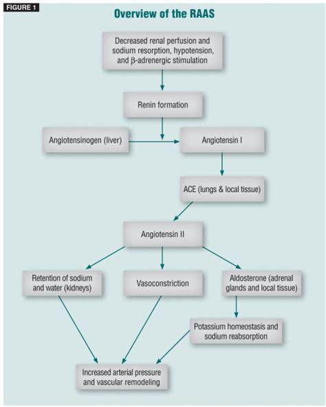 raas system flowchart raas system flowchart 28 images renin angiotensin