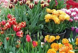 mercato dei fiori via trionfale 45 roma parola d ordine mercatini pro loco di roma pro