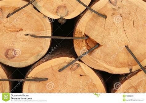 cross sectional cut cross sectional cut of tree royalty free stock photos