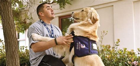 ptsd dogs how dogs can help veterans overcome ptsd science smithsonian