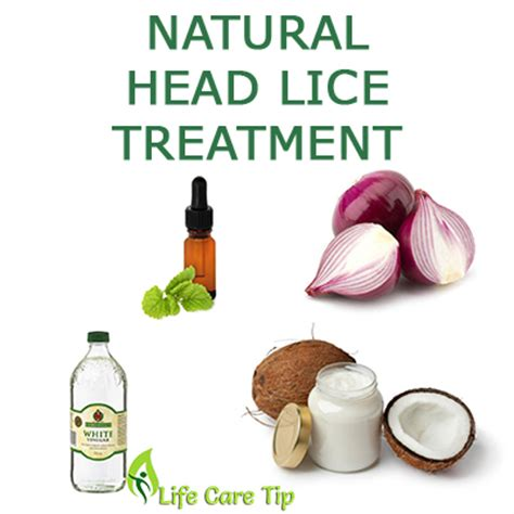 lice treatment pictures to pin on pinsdaddy