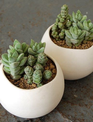 tiny plants 25 best ideas about small potted plants on pinterest