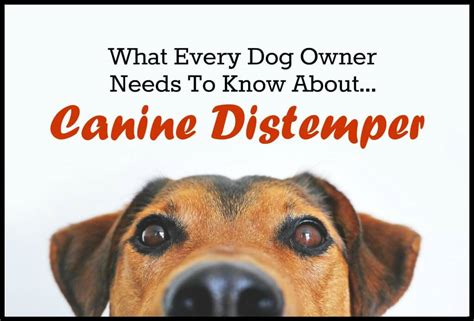 puppy distemper what every owner needs to about canine distemper pbs pet travel