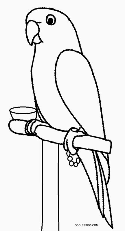 parrot coloring page printable parrot coloring pages for cool2bkids