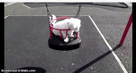 shadow swing 11 dogs who love to play on swings