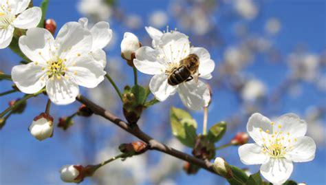 meteo web co dei fiori il diesel mette in pericolo le api la freccia verde la
