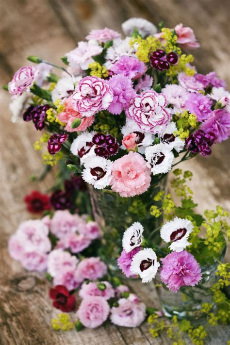 facts about carnations carnation fun facts why carnations are the best
