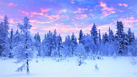 the winter lapland winter travel travel and tour packages to the