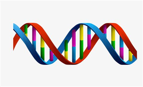 dna colors color dna dna color spiral png image and clipart for