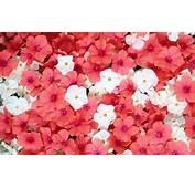 Vara Frumoase Wallpaper Flori Superbe Imagini Desktop Sau Avatar