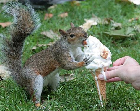top secret tips for feeding squirrels in your backyard