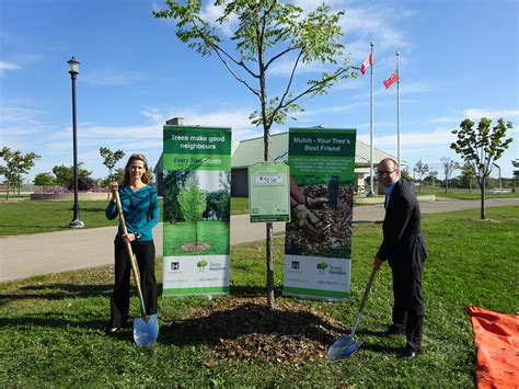Hamilton Tree Planter by Canadian City Prices 150 Local Trees For National Tree Day The Stormwater Report