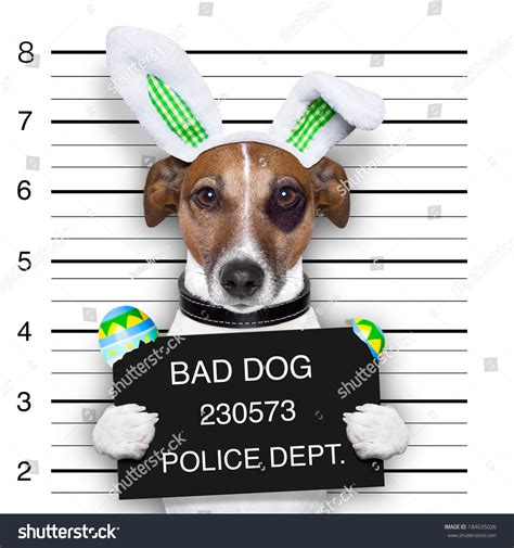 eggs bad for dogs easter mugshot bad broken easter stock photo 184035026