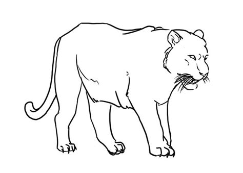 stripeless tiger coloring page free tiger lineart blank by luar linearts on deviantart