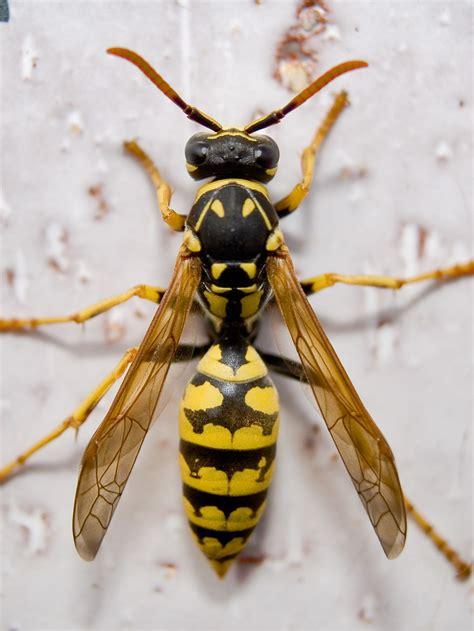 imágenes de animales insectívoros animales e insectos im 225 genes taringa
