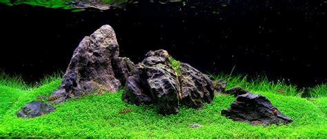Amano Aquascaping What S Your Aquascape Style Cflas