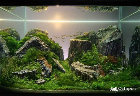 Tutorial Aquascape tamo daleko iaplc aido bonsai