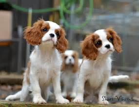 15 innocent and cute puppies photography