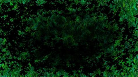 wallpaper green dark dark green wallpapers wallpaper cave