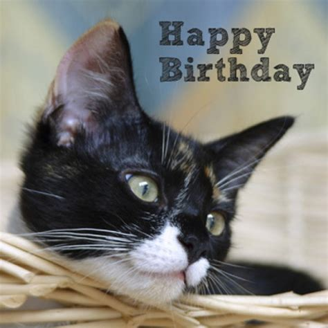 Happy Birthday Cat Card Happy Birthday Cats Cat Card Zoom Kitten Images Litle Pups