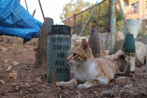 Tas G Ci Pallas un ricovero per animali in aleppo 232 stato bombardato ma