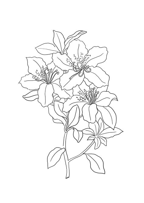 flower color pages flower coloring pages