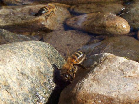 abeille assurances si鑒e social pourquoi les abeilles meurent elles en masse