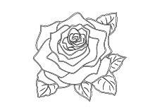 Flower In Vase Drawing Malvorlagen Rosen Und Rosenknospen Zum Ausmalen