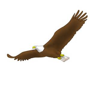 eagles colors how to draw a easy bald eagle flying brown hairs
