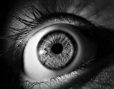 imágenes en blanco y negro gratis blanco y negro im 225 genes 183 pixabay 183 descarga im 225 genes gratis