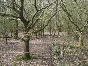 oak woodland nunley pit 169 robin stott cc by sa 2 0