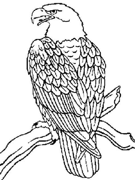 eagle coloring page free the 25 best eagle sketch ideas on pinterest tiger face