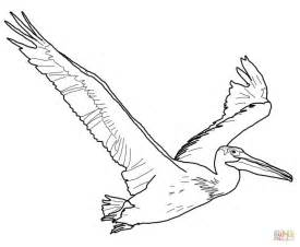 pelicans colors american white pelican coloring page free printable