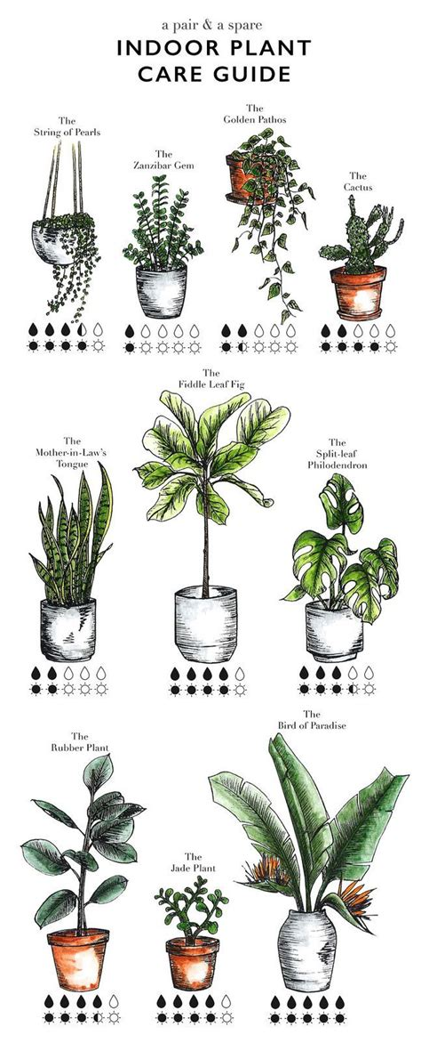 herb care chart 1000 ideas about indoor plant decor on pinterest plant