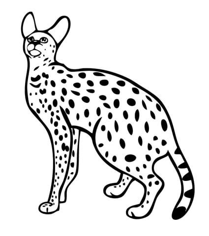 printable coloring pages of wild cats serval wild cat coloring page free printable coloring pages